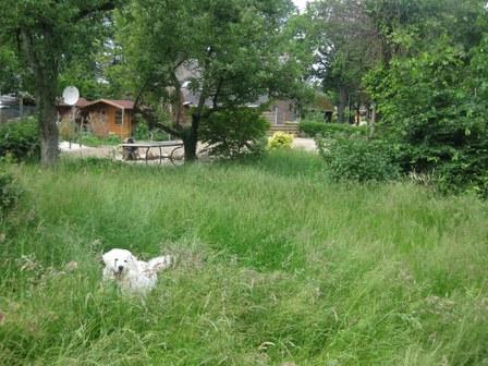 Fitou vindt het hoge gras in de tuin gewéldig.